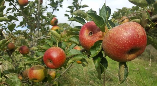 apple purpose