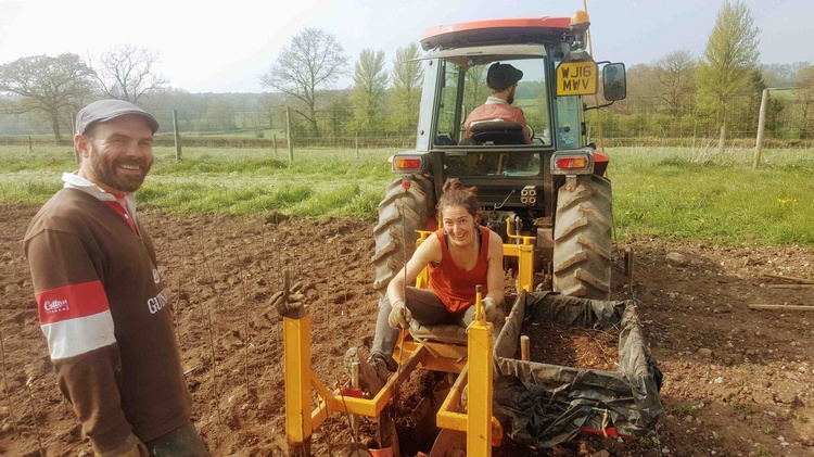 Planting rootstocks 2019 finished at the nursery!