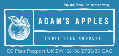Apple Trees and Fruit Trees For Sale. Buy at competitive prices with wholesale discounts.
